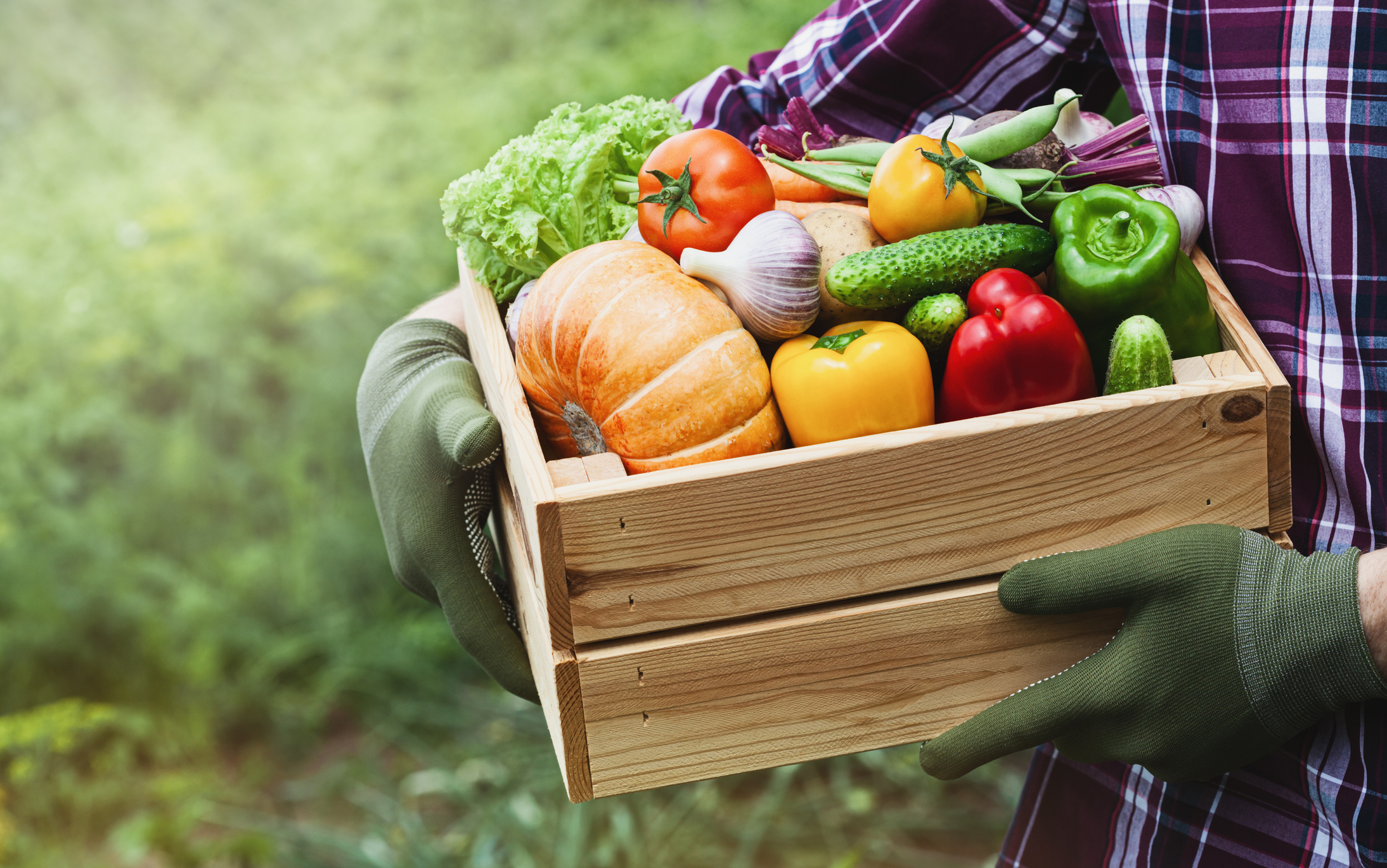 Farmer holds wooden box with vegetables from the garden