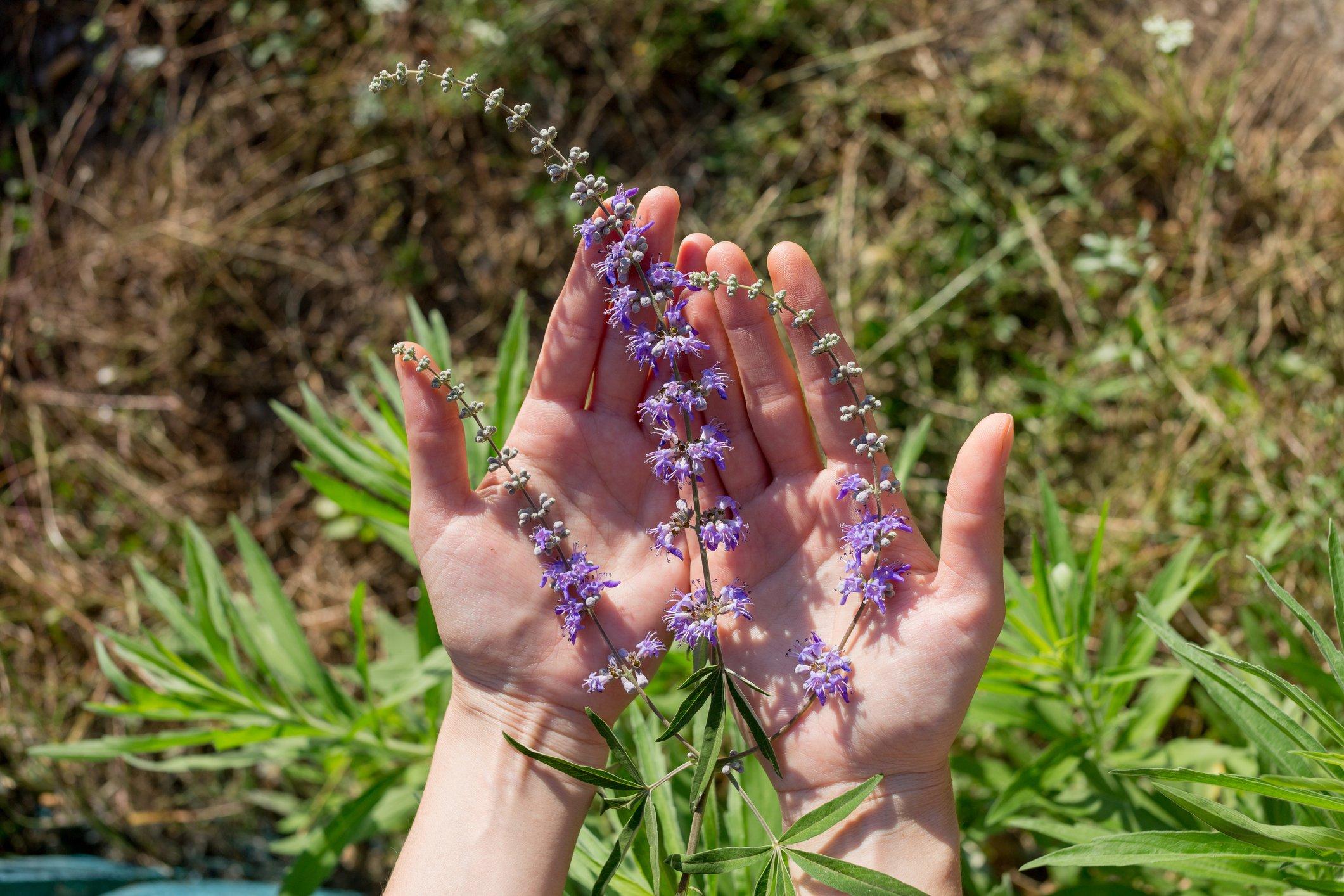 HerbsForEmotionalWellness2